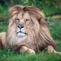 Entrée Datée Adulte